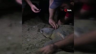 yumurta -  Boynuna ip dolanan caretta carettayı cam parçası ile kurtardılar Videosu