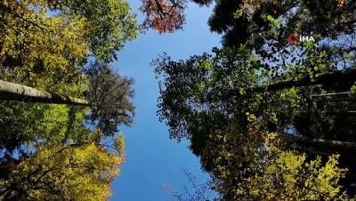 havai fisek -  Türkiye'nin en büyük blok ormanlarına girişler yasaklandı