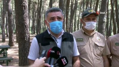 para cezasi -  İstanbul Orman Bölge Müdürü Yusuf Şahin'den orman yasakları ile ilgili açıklama