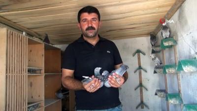 maraton -   Bulgaristan'dan havalanan posta güvercinleri Kızıltepe'ye ulaştı