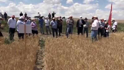 yerli tohum - YOZGAT - Çiftçilere yerli tohumla üretilen 19 çeşit buğday ile 14 çeşit arpa tanıtıldı