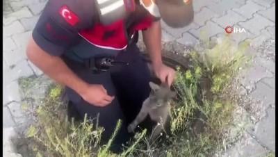 yavru kedi -  Yağmur suyu drenaj kanalına düşen yavru kediyi jandarma ekipleri kurtardı