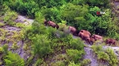 polis memuru -  - Çin'de göçmen filler geleneksel yaşam alanlarına yaklaşıyor