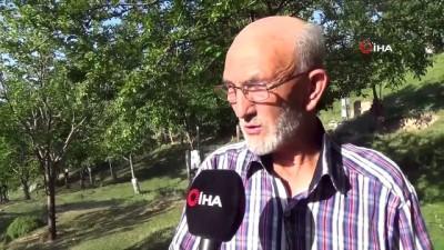 memur -  Emekli memur, köy arazisine 500'e yakın meyve fidanı dikti