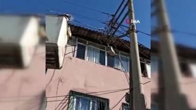 elektrik diregi -   Gdz ekipleri elektrik direğinde mahsur kalan kediyi kurtardı