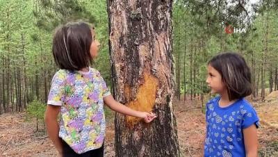 iklim degisikligi -  Gümüşhane ormanlarında şişe seferberliği