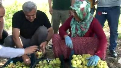 misyon -  ?Yılda 3 bin ton incir yetişiyor Videosu