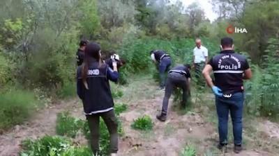 savci -  - Yozgat'ta devlet arazisine ekilen hint kenevirleri imha edildi