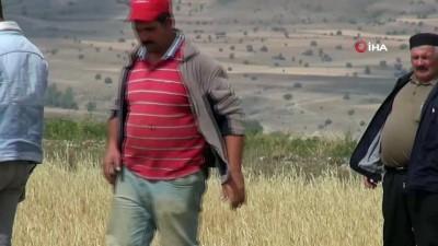 Erzurum'daki dolu ve sel tarım üreticisini vurdu