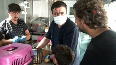 afet bolgesi -  Sel bölgesinde zarar gören hayvanlar böyle tedavi ediliyor Videosu