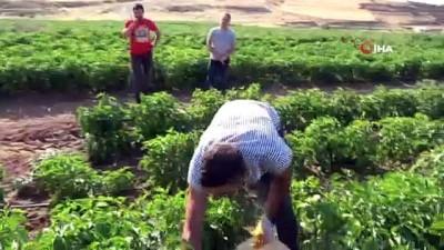 misyon -  150 dönüm üzerine kurdukları tarladan bölgeye meyve ve sebze gönderiyorlar Videosu