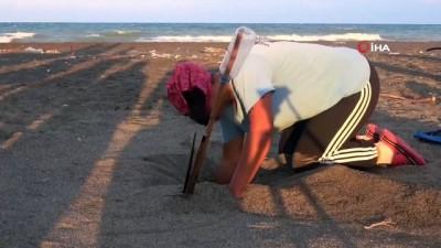 yumurta -  - Hatay'da yavru kaplumbağalar denizle buluştu