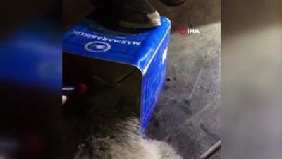 kurtarma operasyonu -  Kafası teneke kutuya sıkışan ayıya itfaiyeden yardım eli