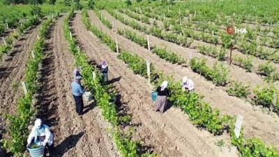 fabrika -  Tokat'tan Dubai ve Katar'a bağ yaprağı ihracatı