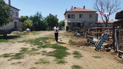 hayvancilik -  Hayvanları araçların altında kalan mahalleli yola kasis istiyor Videosu