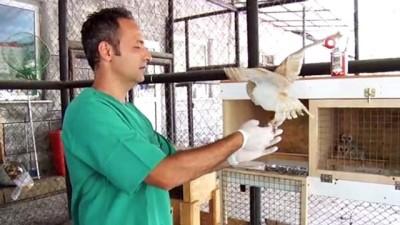 isaf -  Peçeli baykuş yavrusu Tarsus Doğa Parkı'nda hayat buldu