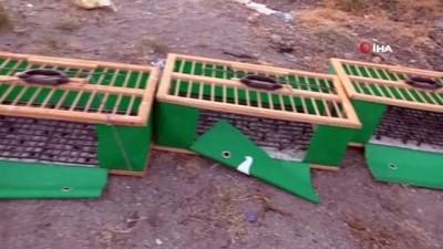 asilama -  9 asırlık patentli kuşlar kupa için kanat çırptı