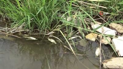 hayvancilik -  Karasu Nehri'nde toplu balık ölümü Videosu