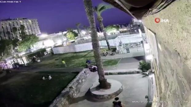 palmiye agaci -  - Üzerine palmiye ağacı düşen kadın feci şekilde hayatını kaybetti