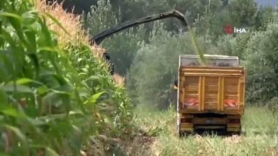 kazanci -  Devlet destek verdi, Bingöl'de silajlık mısır üretimi 14 bin tondan 80 bin tona ulaştı