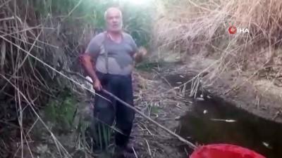 kuraklik -  Suyu biten göletten 4 bin balığı kurtardılar Videosu