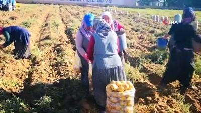 hayvancilik -  Aksaray 7 bitkisel ürünle Türkiye'de ilk 10'da Videosu