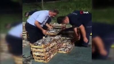 su -  - Boy yasağına aykırı avlanılan 1.5 ton İstavrit balığına el konuldu