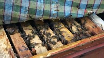 iklim degisikligi -  Küresel iklim değişikliği ve afetlerden en çok etkilenen arılar oldu