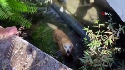 su -  Su kanalına düşen köpeği vatandaşlar kurtardı