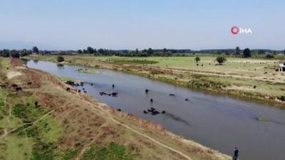 hayvancilik -  Afrika belgesellerini aratmayan görüntüler Videosu