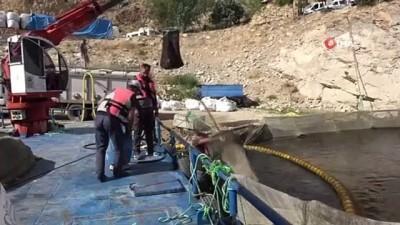 fabrika -  Elazığ'da üretilen somon ve alabalıklar 25 Avrupa ülkesine ihraç ediliyor