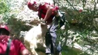 keci -  Kayalıklarda mahsur kalan 11 keçi kurtarıldı