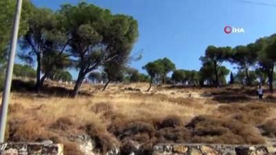zam -  Ayvalık'ta örtü yangınına anında müdahale Videosu