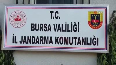 gozalti -  - Bursa'da jandarmadan kenevir operasyonu