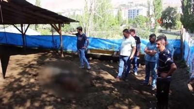 a haber -  Oltu'da kurt dehşeti: 40 koyunu telef etti, 6 koyunu yaraladı