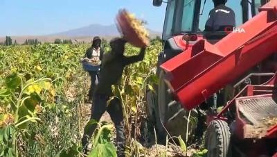 hayvancilik -  Pandemiye rağmen tarımsal üretim değeri 1 yılda 2 milyar TL arttı Videosu