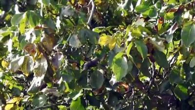 ceviz agaci -  Ceviz ağacındaki sincap ailesi böyle görüntülendi