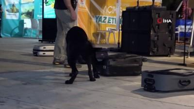 nitelik -  Narkotik köpeği 'Tony' uyuşturucu dolu bavulu buldu