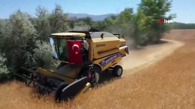 yerli tohum -  Sivas'a özgü Zeron buğdayının hasadı başladı