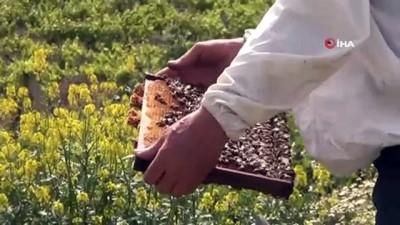 """bal uretimi -  """"Doğal tarım için doğal arıcılık şart"""""""