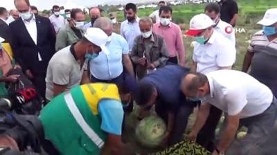 gubre -  Diyarbakır'da yarışacak tescilli karpuzların hasadı başladı