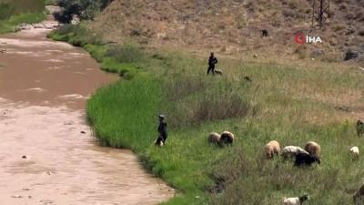 asiri yagis -  Kuraklık sonrası aşırı yağışlar hayvanları etkiledi