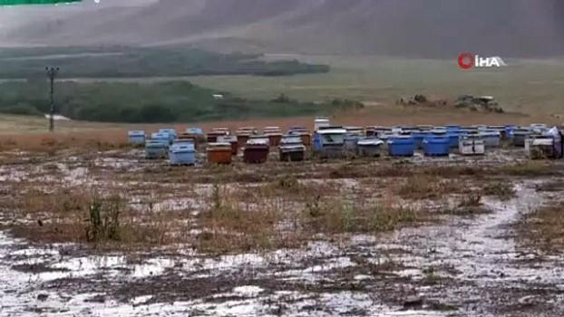 bal arisi -  Şiddetli yağış bal arılarını vurdu