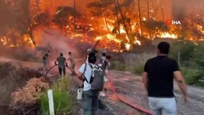 Yürek burkan manzara... Ormanlarla birlikte milyonlarca arı kolonisi de yandı