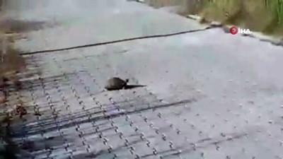 ipekyolu -  Ziftten temizlenen kaplumbağa doğaya salındı